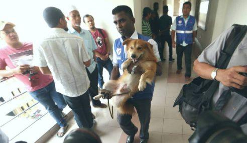 Belasah Anjing: Ahli Perniagaan Didenda RM8,000