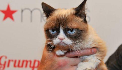 'Grumpy Cat' Menang Saman AS$710,000