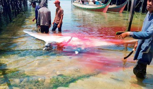 Spesis Terancam Dibunuh Kejutkan Pelancong