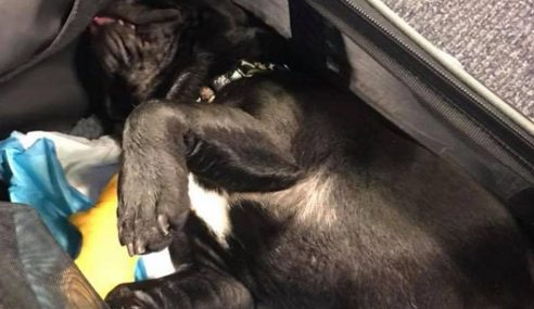 Anjing Mati Dipaksa Letak Dalam Ruang Bagasi