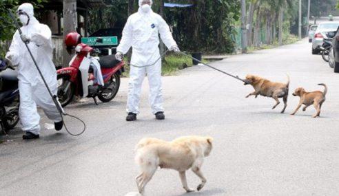 Sarawak Catat Kes Kematian Ke-17 Jangkitan Rabies