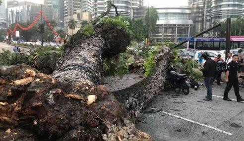 2 Cedera Pokok Tumbang Dekat Menara Petronas