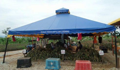 Petani Dapat Manfaat Kemudahan PPL FAMA