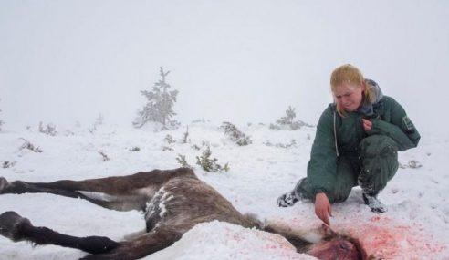 Bulgaria Siasat Kes 100 Kuda Mati Kelaparan