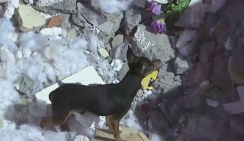 Anjing Setia, Tunggu Tuan Yang Meninggal Dunia