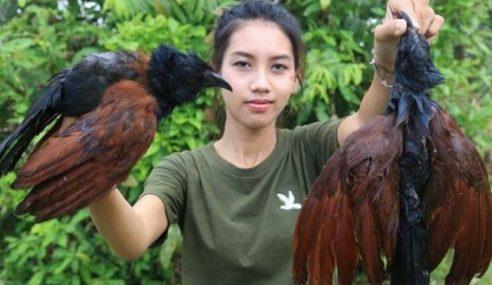 Padah Rakam Aksi Masak, Jamah Haiwan Dilindungi