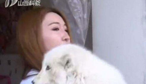 Wanita Sangka Bela Anjing Rupanya Rubah