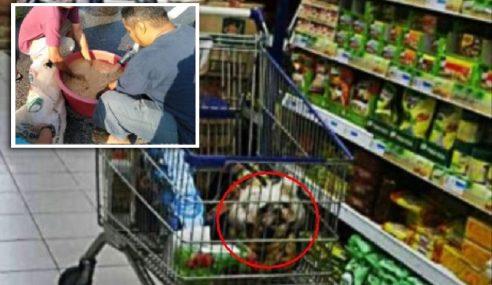 Pasar Raya Sertu Troli Akibat Pelanggan Letak Anjing