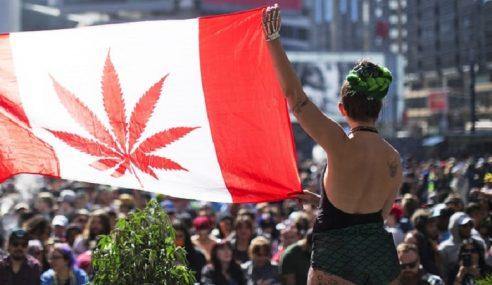 Senat Kanada Lulus Ganja Untuk Tujuan Rekreasi