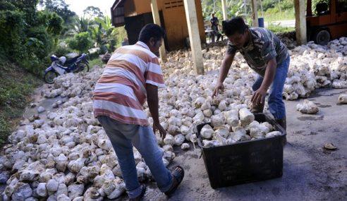 Menteri Mohon Masa Untuk Stabilkan Harga Getah Sabah