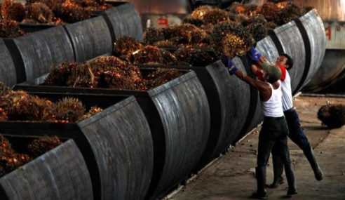 Stok Minyak Sawit Naik 1.26% Pada Julai