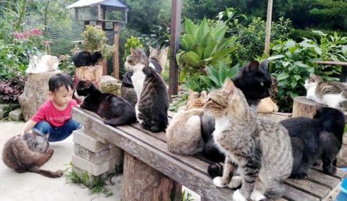 Syurga Kucing Terbiar
