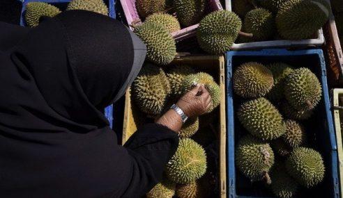 FGV, Syarikat China Kerjasama Tanam Durian