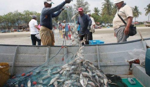 Tak Praktikal Nelayan Tanam Nanas, Rambutan Di Kawasan Rumah