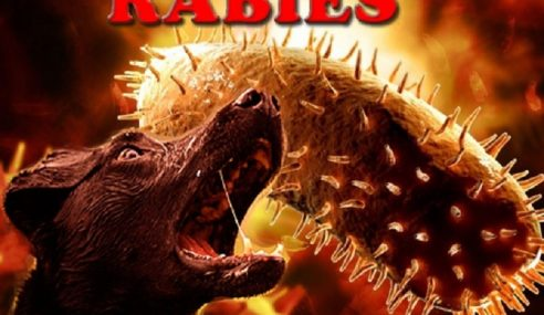 Lelaki Maut Akibat Rabies Di Sarawak