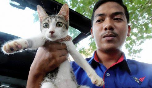 Remaja Tendang Kucing Kena Bon Kelakuan Baik