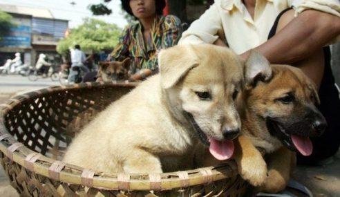 Vietnam Mahu Warganya Henti Makan Anjing