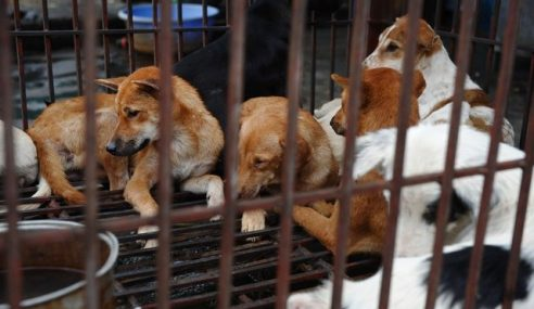 Hanoi Gesa Penduduk Henti Makan Anjing, Kucing