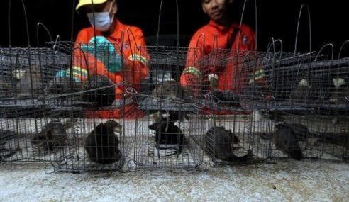 Kempen '1 Tikus RM3' Tangkap 78,000 Tikus Sejak 2012