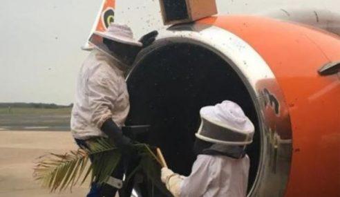 Penerbangan Ditunda Gara-Gara Serangan Lebah