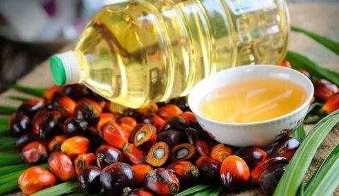M'sia, Indonesia Digesa Bekerjasama Tingkatkan Minyak Sawit
