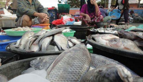 Ternakan Ikan Air Tawar Hadapi Musim Tengkujuh