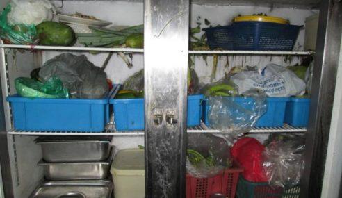 55+ Gambar Ayam Hutan Tertembak Paling Bagus