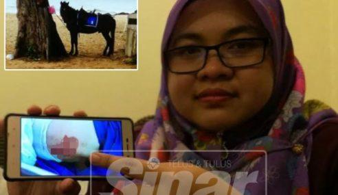 Guru Digigit Kuda Ketika Bercuti Di Thailand