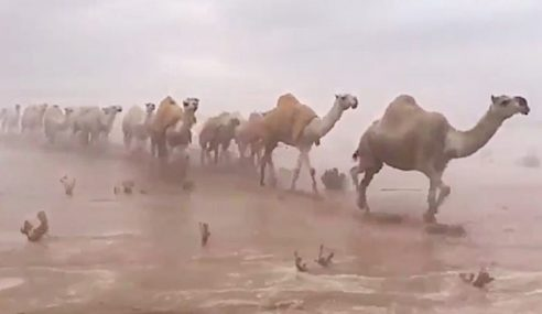 Gurun Timur Arab Saudi Dilanda Banjir