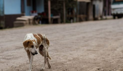 Melaka Kuat Kuasa Undang-Undang Pastikan Isu Libat Anjing Diatasi