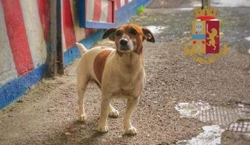 Mafia Upah 5,000 Euro Bunuh Seekor Anjing