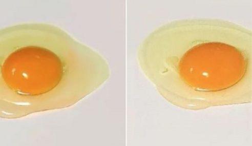 Karya Pelukis Jepun… Mana Satu Telur Sebenar?
