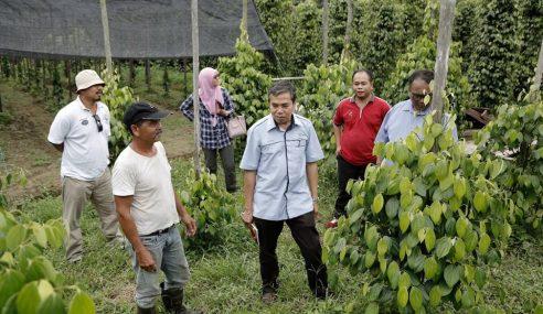 Bantuan RM10j Skim Tanaman Baharu Lada Tahun Depan