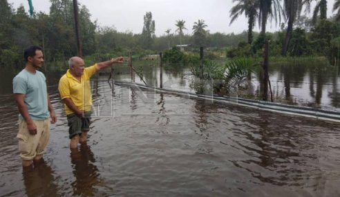 Banjir Melanda, Penoreh Hilang Pendapatan