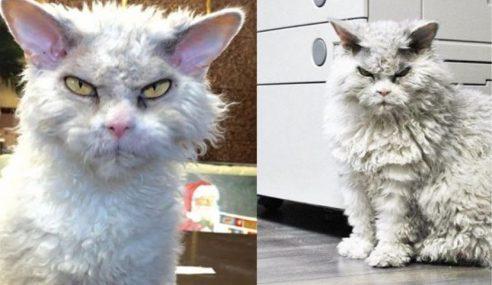 Pompous Albert Kucing Paling Garang Di Dunia?