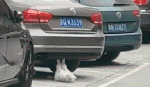 Comel… Kucing Juga Boleh Lakukan Senaman 'Sit Up'