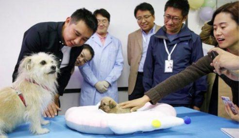 Lelaki Klon Anjing Miliknya Setelah Jadi Bintang Filem