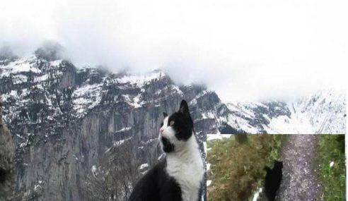Kucing Bantu Pendaki Sesat Di Pergunungan Alps