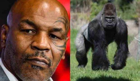 Mike Tyson Mahu Bayar RM40,865 Lawan Gorila