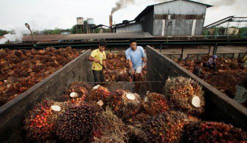 Indonesia Akan Cabar Dasar Minyak Sawit EU