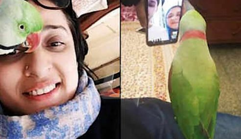 Ganjaran 20,000 Rupees, Burung Nuri Kerabat Hilang