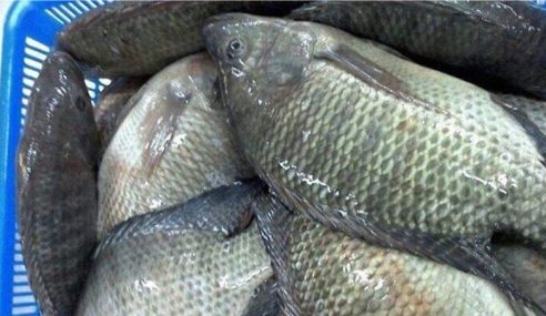 Pencemaran: Keputusan Sampel Ikan Minggu Depan