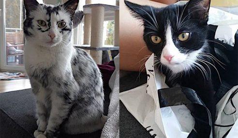 Warna Bulu Kucing Berubah Disebabkan Vitiligo