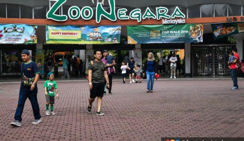 Zoo Negara Kurang Dana, Tiada Sokongan Kerajaan