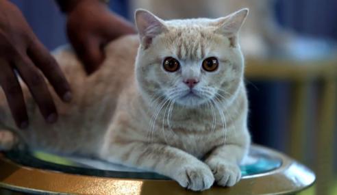 Jangan Pelihara Kucing Kalau Menyusahkan Keluarga, Jiran