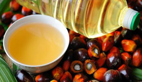 Harga Minyak Sawit Naik, India Beralih Minyak Bunga Matahari