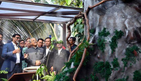 Merbau Dipilih Pokok Kebangsaan Malaysia
