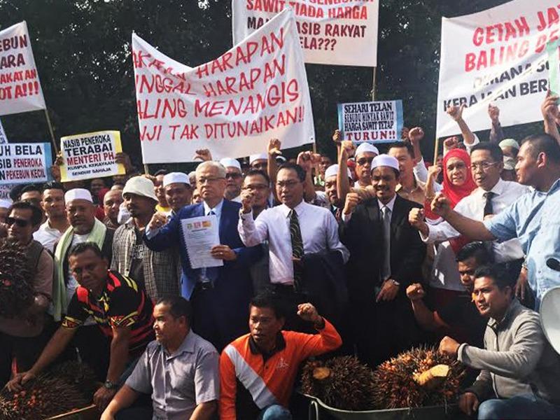 Peneroka Bawa Tandan Sawit Protes Di Luar Parlimen