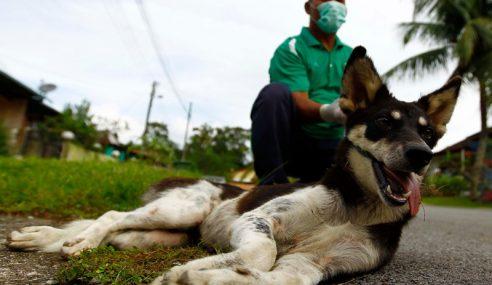 Wabak Rabies Ragut Nyawa Ke-21 Di Sarawak