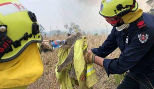 Setengah Bilion Haiwan Terbunuh Kebakaran Di Australia